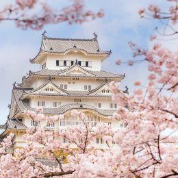 Kirschblüten und Tempel in Japan