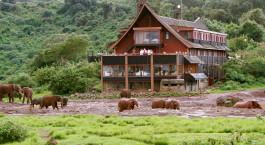 Außenansicht der Aberdares The Ark in Kenia mit wandernden Elefanten im Schlamm
