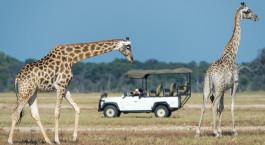 Safarierlebnis im Davison's Camp in Hwange, Simbabwe