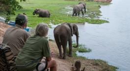 Elephants watching in Mana Pools, Zimbabwe