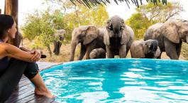 Frau beobachtet Elefanten im Krüger Nationalpark, Südafrika