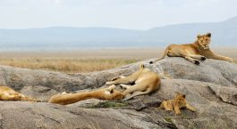 Enchanting Travels Africa Tanzania Tours Serengeti