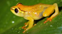 Bunter Frosch in den Usambara Mountains