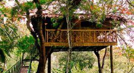 Tranquil Resort, Wayanad