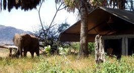 Exterior of tent at Elephant Bedroom Camp in Samburu, Kenya