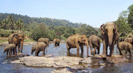 Auf Indien Safari in Nargarhole: Elefanten passieren einen Fluss
