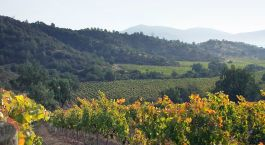 Weinberge in Casablanca, Chile