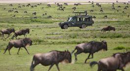 Auf Jeep Safari in Arusha