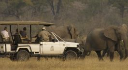 Safari tours at Camp Moremi, Chobe National Park, Botswana