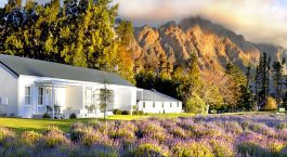 Outside view of Lavender Farm Guest House in the Winelands, South Africa