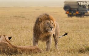 wilderness safari