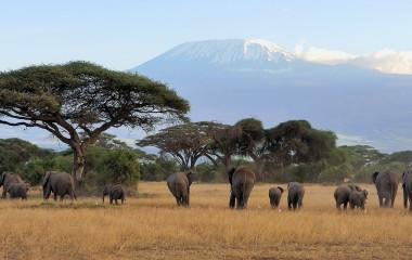 Enchanting Travels - Tanzania Tours - West Kilimanjaro - Elephant with Mount Kilimanjaro in the background