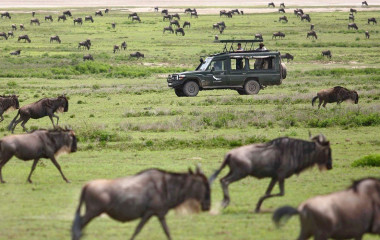 The Great Migration in Tanzania Travel