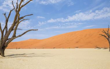 Enchanting Travels - Namibia Reisen - Sossusvlei - Bäume