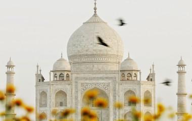 Schnappschuss des Taj Mahal in Agra mit vorbeifliegenden Vögeln