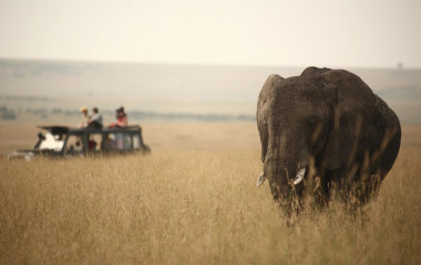 Elefant in Kenias Savanne, im Hintergrund ein Safari-Geländewagen