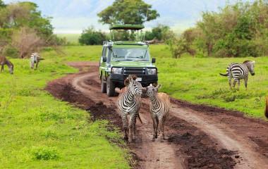 Best time to Travel to Tanzania Africa Safari tour