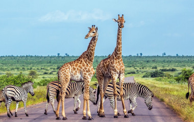 Best time to visit Africa