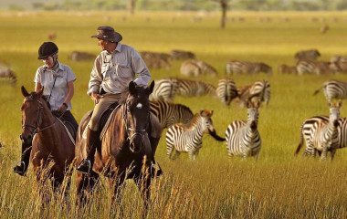 African serengeti-national-park-zebras