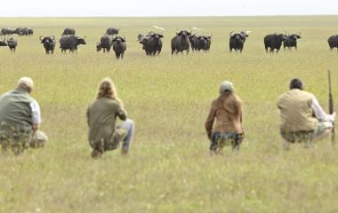 OPBC-walking-safari-animals
