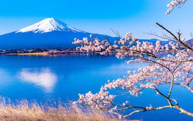 Idyllische Aufnahme vom Kawaguchi-See mit Kirschblüten und Fuji im Hintergrund, Japan