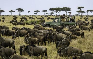 Wildebeest Migration - Serengeti, Africa