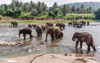 Elefanten in pinnawela Sri lanka, Asien
