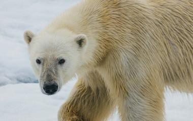 Enchanting Travels Russian Arctic Tour with Quark