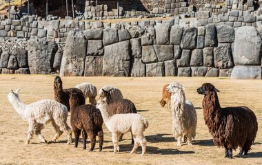 Saqsaywaman, is a citadel on the northern outskirts of the city of Cusco, Peru, South America