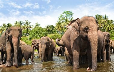 The Best Wildlife Experiences on your Sri Lanka Tour