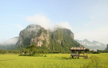 Rice fields, Phonsavan, Laos, Asia