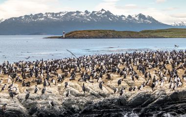 Enchanting Travels South America Tours Cormorants (sea birds) island - Beagle Channel, Ushuaia, Argentina