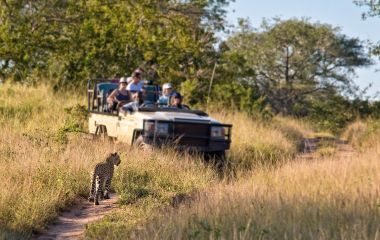 Enchanting Travels Tourists observing a female leopard, South Africa