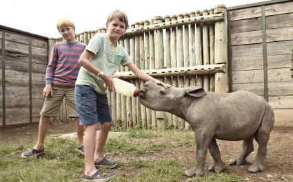Feeding a baby rhino at Ol Pejeta Bush Camp in Laikipia - Ol Pejeta / Solio, Kenya