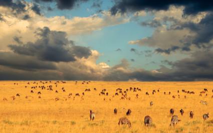 Tierherden in der Ferne im Serengeti-Nationalpark, Kenia