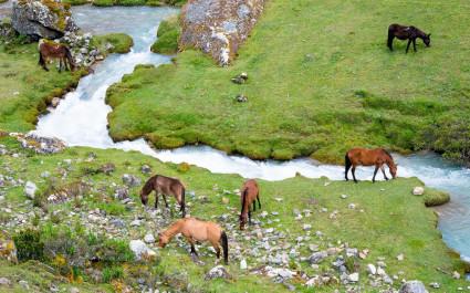 Blick von oben auf grasende wilde Pferde am Flussufer entlang der Salkantay-Trekkingroute in Peru