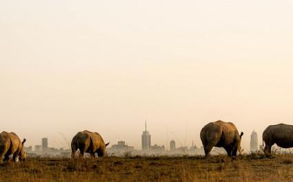 Nashörner im Nairobi Nationalpark