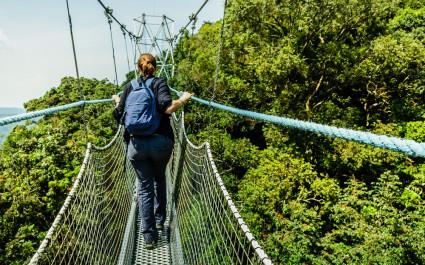 Baumkronenpfad in Ruanda