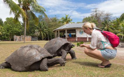 Seychelles safety - Female tourist woman feeding old Aldabra giant tortoises in National Marine Park on Curieuse island, Praslin, Seychelles, Africa - Seychelles travel guide