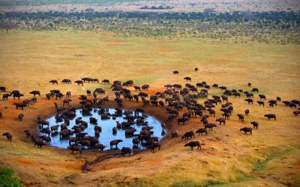 'Lion King' inspired African Safari Mara