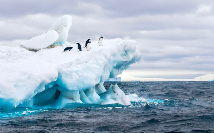 A group of five Adelie penguins frolick on a floating iceberg in the icy cold waters of the Weddell Sea, Antarctica vacation