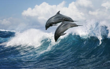 Enchanting Travels Hawaii Tours Dolphin