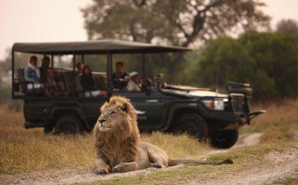 Enchanting Travels-Botswana Tours-Okavango Delta-Sandibe Safari Lodge-Game drive