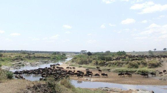 tansania-reisen-northern-serengeti-migration