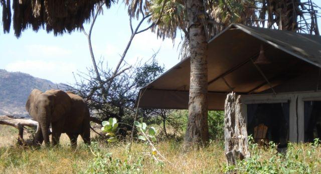 Elefanten in einem Camp in Kenia