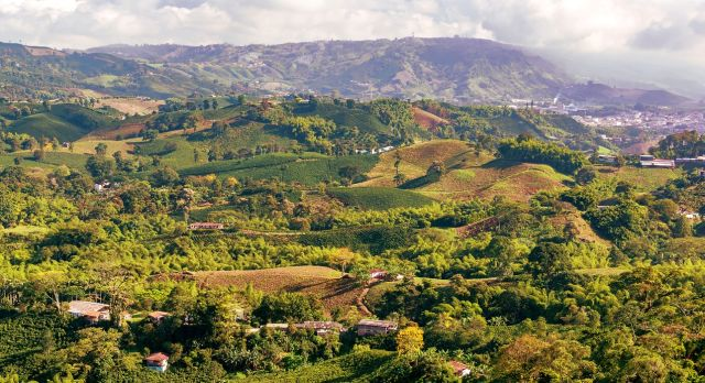 Sattgrüne Landschaft der Kaffeeregion