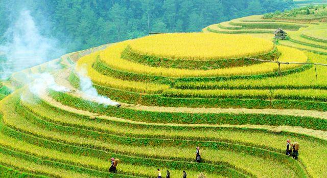 Enchanting Travel Vietanam Tours Mu Cang Chai Rice fields on terraced of Mu Cang Chai, YenBai, Vietnam. Rice fields prepare the harvest at Northwest - Vietnam destinations