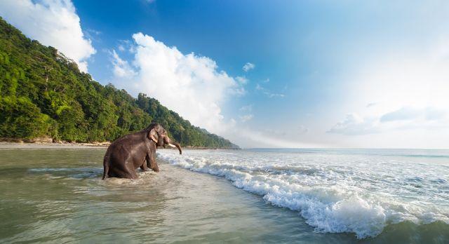 Radhanagar Beach at the Andamans, India