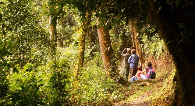 Birdwatching tours in Rwandan forests