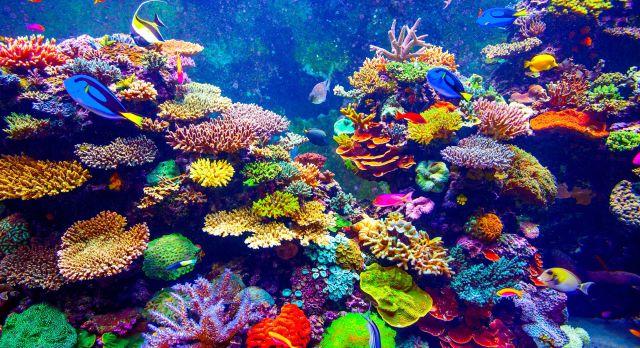 Visit the S.E.A Aquarium in Sentosa Island